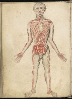 15th Century Illustrations of the Human Body