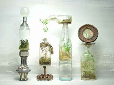 recycled bottles with terrariums: locally grown plants, wild mosses, small stones, soil, and wood chips inside