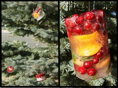 Frozen Outdoor Ice Ornaments!! I've made outside ornaments before, but not like these!  They look great!