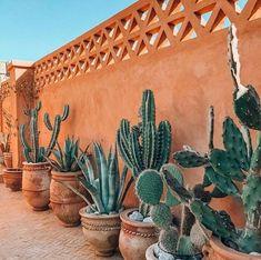 Cactus and succulents. Cactus Pot, Cactus Flower, Flower Bookey, Flower Film, Flower Band, Flower Plants, Grand Cactus, Decoration Cactus, Home Decoration