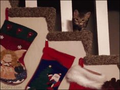 someone getting on santa naughty list crazy cats more cute...