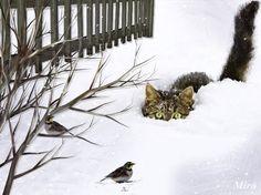 Katze+Schnee