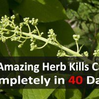This-Amazing-Herb-Kills-Cancer-Completely-In-40-Days-