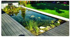 Bildergebnis für teich rechteckig Pond Design, Water Features In The Garden, Live Cams, Outdoor Living, Outdoor Decor, Water Garden, Home Decor, Swimming, Ponds