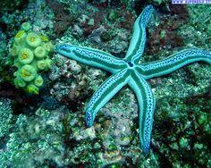 http://www.pinterest.com/Arredocountry/creature-marine/