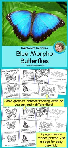 Engage your first - third grade students in non-fiction reading with these Blue Morpho, Morpho Butterfly, Monarch Butterfly, Child Teaching, Teaching Ideas, Teaching Resources, Science Lessons, Science Activities, Rainforest Classroom