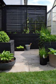 Diy Fence, Backyard Fences, Backyard Landscaping, Modern Backyard, Fence Ideas, Landscaping Ideas, Back Gardens, Outdoor Gardens, Garden Lighting Effects