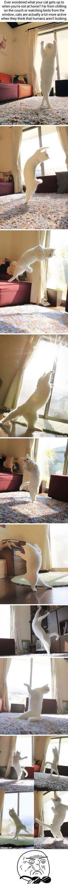Ballet Cat Dances Like Nobody's Watching (@ccchisa76)<<THIS CAT GOT MORE SKILL THEN ME (that's not saying much though)