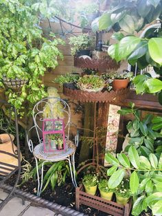 Container Gardening, Plants, House, Home, Plant, Container Garden, Homes, Planets, Houses