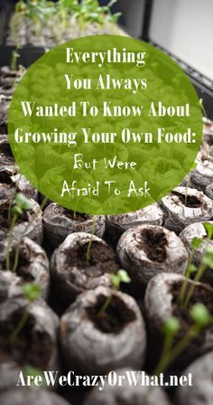 Organic Gardening Ideas The nitty-gritty about growing your own food organically. I address things you won't find in a gardening book. Veg Garden, Edible Garden, Vegetable Gardening, Forest Garden, Indoor Garden, Organic Gardening Tips, Organic Farming, Gardening Books, Container Gardening