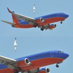 Southwest Airlines - many flights a day into #TPA www.southwest.com