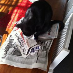 Never turn your back on your newspaper if you just previously ignored the cat.
