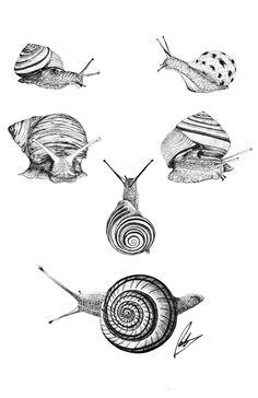 Snail Tattoo, Insect Tattoo, Tattoo Design Drawings, Art Drawings, Tiny Flower Tattoos, Mushroom Tattoos, Snail Art, Mushroom Drawing, Frog Tattoos