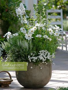 Container Gardening Ideas Cosmos Sonata 'White', Delphinium 'Galahad', Salvia nemorosa 'Adrian', Campanula×haylodgensis 'White Wonder' n Euphorbia 'Diamond Frost' - Container Flowers, Container Plants, Container Gardening, Container Houses, Back Gardens, Small Gardens, Outdoor Gardens, Moon Garden, Dream Garden