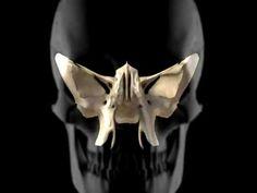 ▶ SKull Demonstration.mp4 - YouTube craniosacral cranialsacral