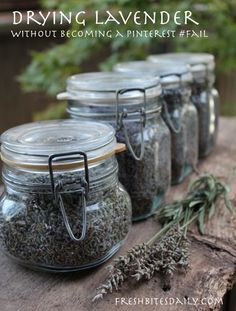 How to dry fresh lavender; recipes and tips for using dried lavender. Lavender Crafts, Lavender Recipes, Lavender Tea, Lavender Fields, Lavander, Lavender Plant Uses, Lemon Balm Recipes, Lavender Garden, Lavender Bags