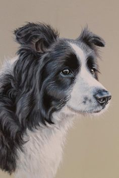 how to paint a border collie - Google Search