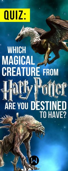 A quiz that will determine what kind of magical creature you would actually own in the wizarding world of Harry Potter. I got a Phoenix! Harry Potter House Quiz, Harry Potter More, Harry Potter Pictures, Harry Potter Houses, Harry Potter Theme, Harry Potter Facts, Harry Potter Fandom, Hogwarts Houses, Diabolik Lovers