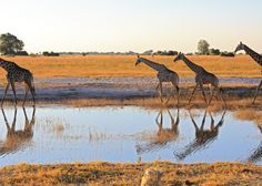 Under One Botswana Sky encompasses six safari lodges and camps to provide the most comprehensive, affordable, Botswana safari experience. Photo Competition, Camps, Photo Contest, Lodges, Wilderness, Safari, Photographs, Magic, Activities