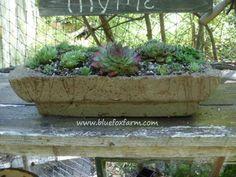 A favorite Hypertufa trough made from a bird cage... www.bluefoxfarm.com/hypertufa-troughs.html