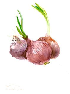 Red Onions painting original watercolor art 12 x 9 by ORIGINALONLY