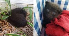 Woman Finds Tiny Ball of Fluff In Rose Bushes, Chirping for Help...