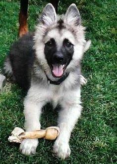 All time faves!   A community of German Shepherd lovers! #germanshepherd