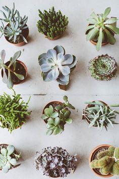 mini-jardins de suculentas