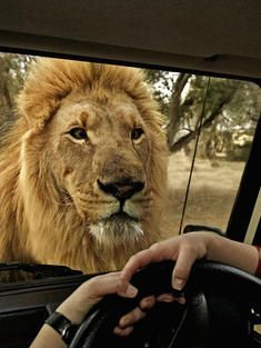 South Africa Safaris.  Get close-up looks at the 'Big Five' on a South Africa Safari.  (WWF tour)