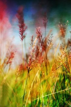 Image uploaded by Cara Sposa. Find images and videos about photography, nature and colors on We Heart It - the app to get lost in what you love. Bokeh Photography, Amazing Photography, Fotografia Macro, Belleza Natural, Mellow Yellow, Belle Photo, Beautiful World, Beautiful Gif, Pretty Pictures