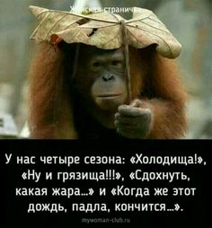 Russian Humor, Funny Expressions, Clever Quotes, Just Kidding, Make You Smile, Psychology, Laughter, Have Fun, Jokes