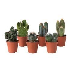 Biljke, saksije i stalci - Suvo cveće i potpuri - IKEA Ikea Plants, Potted Plants, Cactus Plants, Plant Pots, Indoor Plants Online, Ikea Shopping, Easy Care Plants, Decoration Plante, Gardens