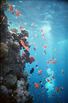 Egypt, Red Sea, scuba diving