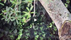 """Descubre parte del proceso creativo de los arquitectos #CarlosOtt y Carlos Ponce de León para la intervención de la silla Series 7 del proyecto """"7 Cool Architects"""" de #FritzHansen. El trabajo de los uruguayos está siendo actualmente exhibido en Museo Nacional de Artes Visuales (#MNAV). Fritz Hansen, Hot Topic, Cool, Plants, Visual Arts, Architects, Museums, Flora, Plant"""