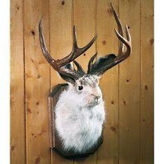 jackolope- yes I want one