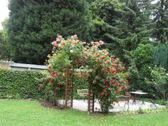 Willkommen im idyllischen Grün - der Rosenterrasse vom AKZENT Hotel Am Hohenzollernplatz. Bad Godesberg, Villa, Das Hotel, Dom, Outdoor Structures, Plants, Birthing Center, Vacation, Flora