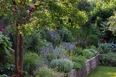 Acer griseum and Silver Border in the morning light - great design- Herbert Frei