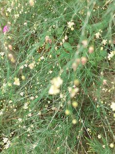 Dandelion, Flowers, Plants, Fotografia, Dandelions, Plant, Taraxacum Officinale, Royal Icing Flowers, Flower