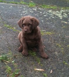 Making sure we chose the right girl from the litter. Missy at 7 weeks. The whole litter were all very well fed!