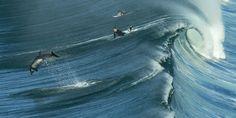 San Diego's top surf spots