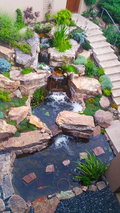 Beautiful pond designed, created and maintained by Bosque Natural.