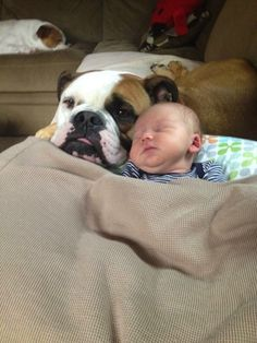 ❤ Bully Babies ---- always want to SHARE the LOVE ❤