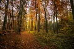 New post on beautifulmysteriousforests Mystery, Country Roads, Forests, Beautiful, Autumn Forest, Switzerland, Pictures, Landscape, Nature