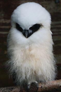 I <3 owls.