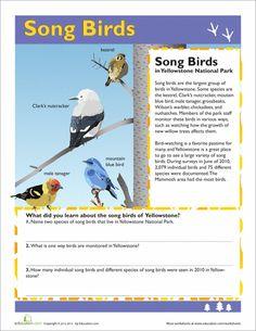 Song Birds, Yellowstone