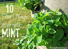 Fresh Eggs Daily®: 10 Fun Things to Do with Mint This Summer.