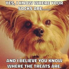 #treats #socks #dogs http://ift.tt/2wKhHMl