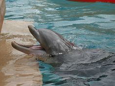 """Where to Swim with Dolphins in Florida""=>"