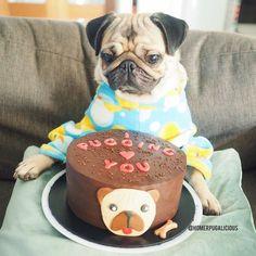 Cake & pug!