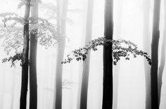 Dialogue by Serban Bogdan on Art Limited Snow Forest, Black And White, Art Work, Artist, Landscapes, Sun, Home Decor, Artwork, Paisajes